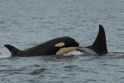 L41's offspring: L112