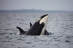 J36 being playful with J16 and J42