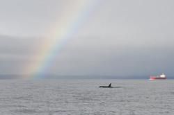 L115 with rainbow