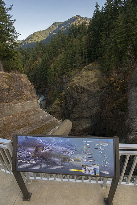 Interpretive sign along the Elwha River