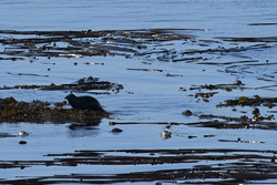 Seals whalewatching