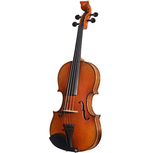 Golden Tasman Viola