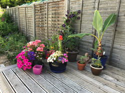 Summer plants on the deck