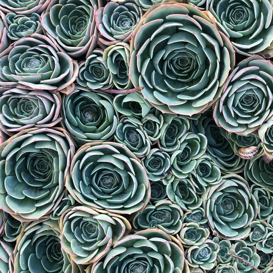 Marha's very own succulent patch.jpg