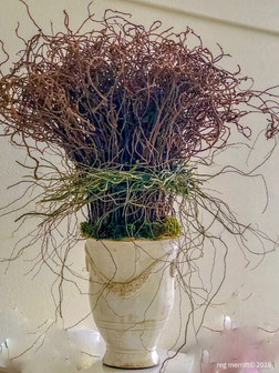 Textural Kiwi w/curly willow collar- Santa Rosa Jones Estate2DE.jpe