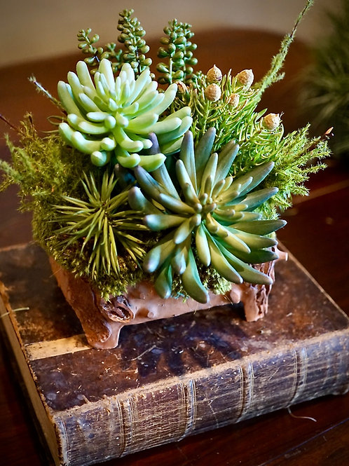 Faux succulents in rustic bonsai container.
