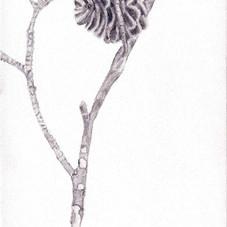 ענף אצטרובל.jpg