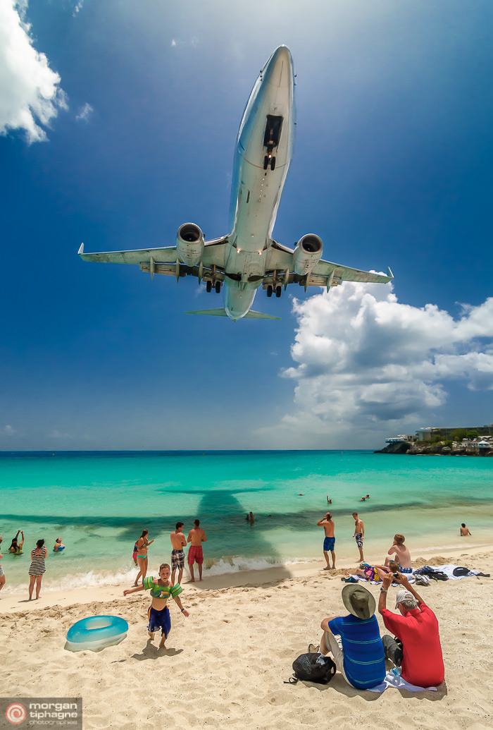 Sint Maarten bird - Maho beach - Morgan Tiphagne.jpg