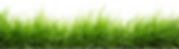 grass no background.png