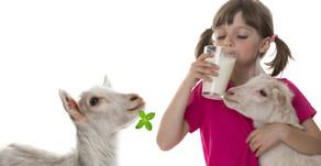 What Does Goat Milk Taste Like?