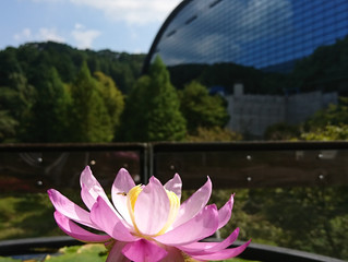大宰府天満宮と九州国立博物館