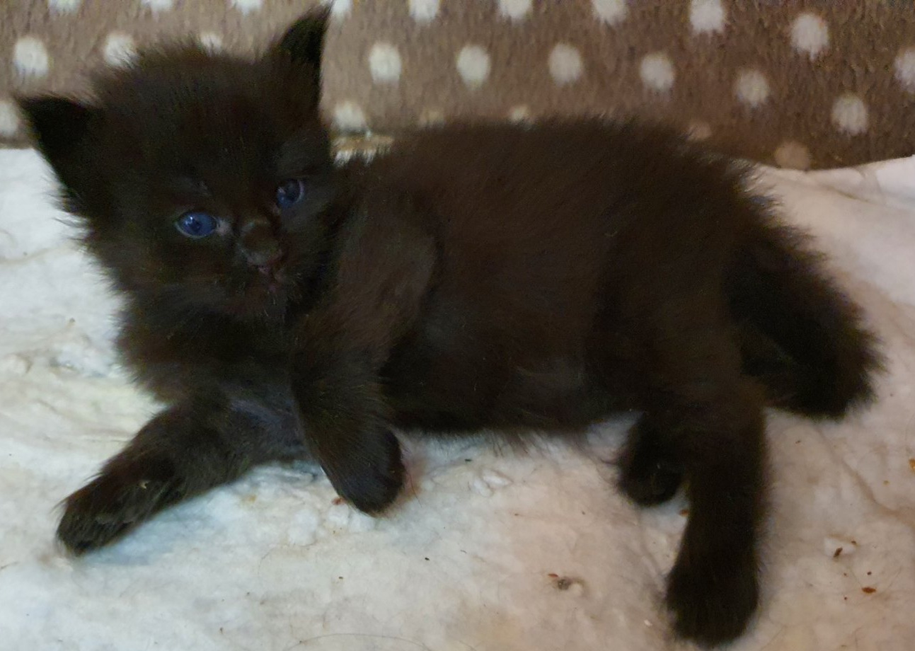 male available