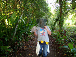 Tortuguero rain forest
