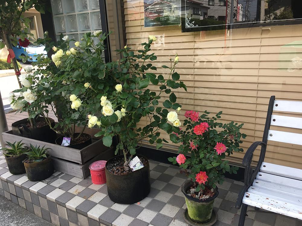 美容室DAF茅ヶ崎 園芸ブログ
