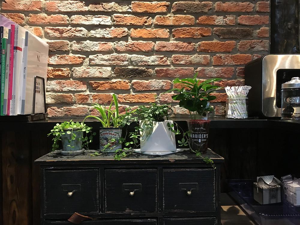美容院ダフ湘南・茅ヶ崎 お店の植物