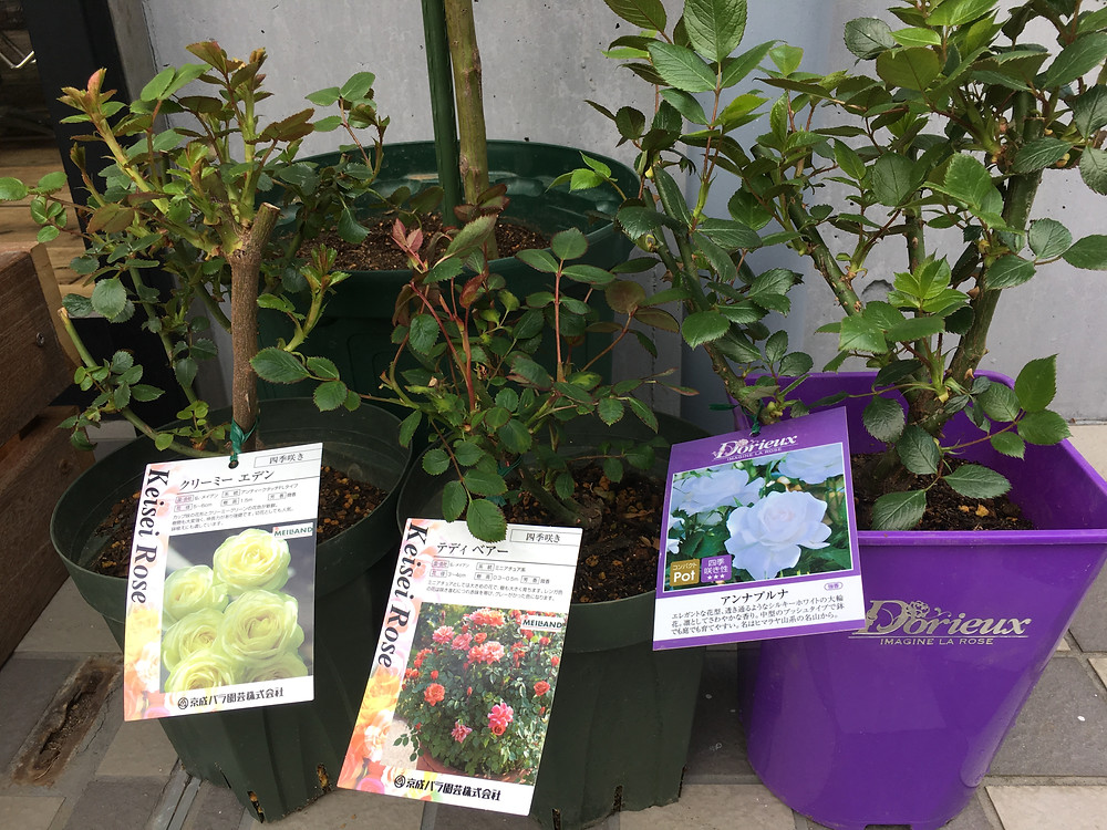 DAF hair 茅ヶ崎 Rose garden