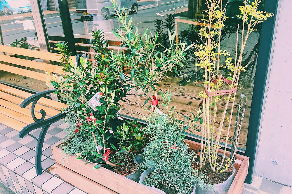ダフヘアー 花壇