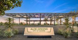 Aloe Greens 6