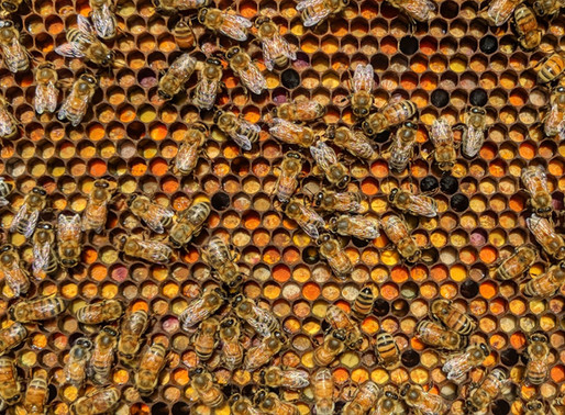 Follow Homer's Beekeeping! September 2020