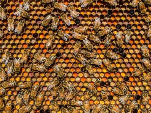 Follow Homer's Beekeeping! September 2020