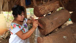 Miel curativa, un producto ancestral y nacional