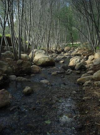 Bosque Zembo