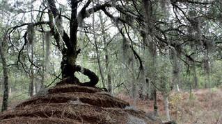 Duende en el bosque