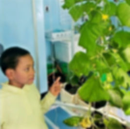 Kamari looking at hydroponic plant station