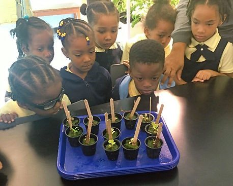 Pre-K students observe their plants