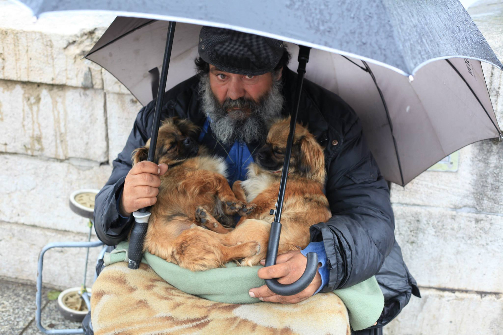 Parisian Man with two pups