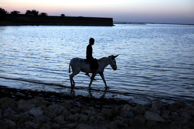Bahraini boy riding a donkey