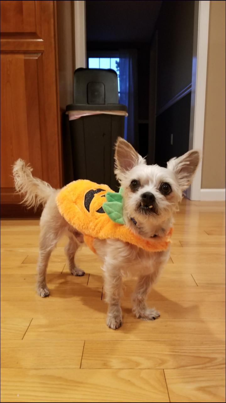 Baxter's Halloween Bash