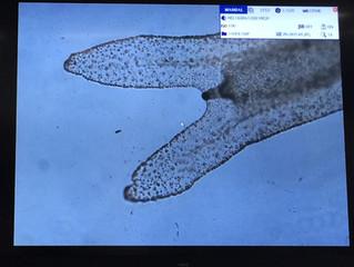 クラゲの勉強@加茂水族館(その2)Jellyfish study@Kamo Aquiarium(2)