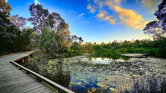 Berrinba Wetlands.jpeg