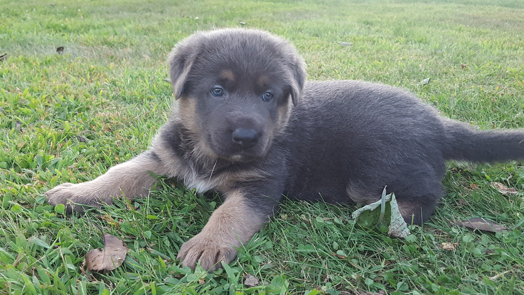Alex as a puppy