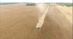 2018 corn harvest 6