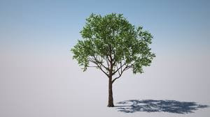 A New Year of Living--Thanks to Trees