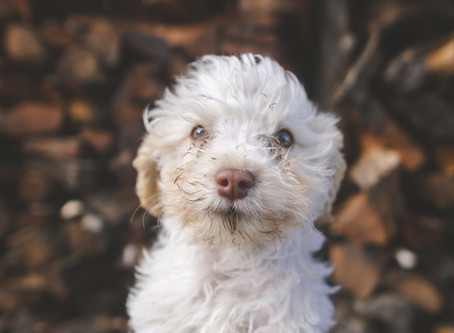 """The Inept """"Puppy Syndrome"""" and a COVID-19 Suicide Effect"""