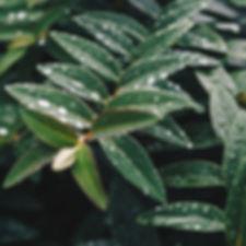 nasse Blätter