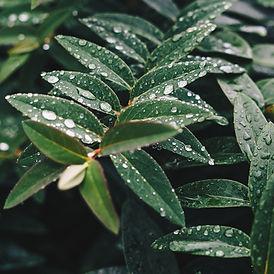 våta löv
