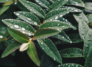 梅雨入りですね。