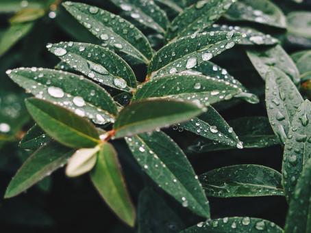 Spiritual Health: The Gateway to Evergreen Creativity.