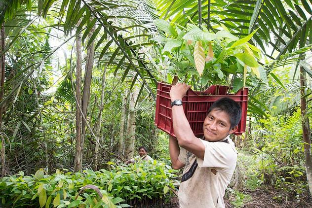 Proyecto productivo Cacao, Beneficiario