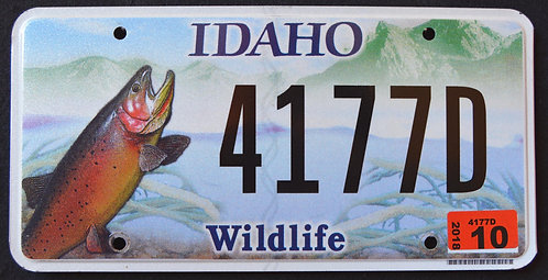ID Wildlife Trout - Fish - 4177D