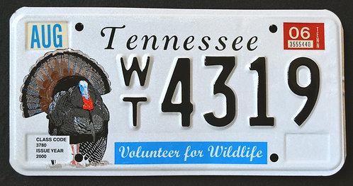 TN Wild Turkey - Volunteer For Wildlife - WT4319