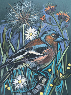 Chaffinch with Devil's paintbrush