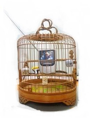 Cage in the cage