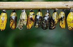 animal-blur-butterfly-39862.jpg