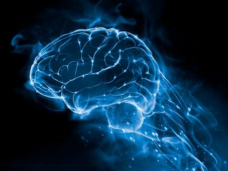 Η πλαστικότητα του εγκεφάλου
