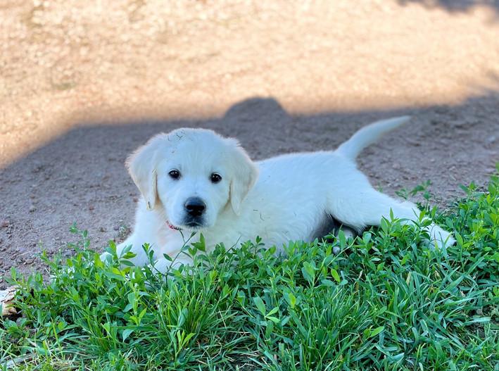 beautiful pup.jpg